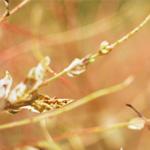 Blackflower Patisserie (悉尼食记)