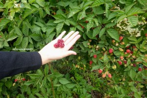【Travel】Sorell Fruit Farm .::Cherries and Berries::.