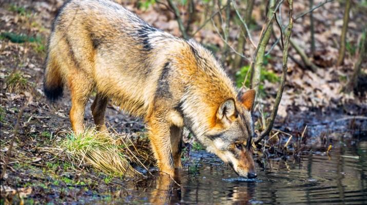 EWS - Wildlife -00011_.jpg