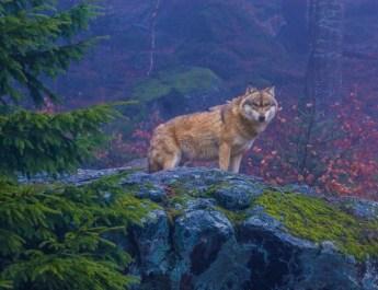 EWS - Wildlife -10732_.jpg