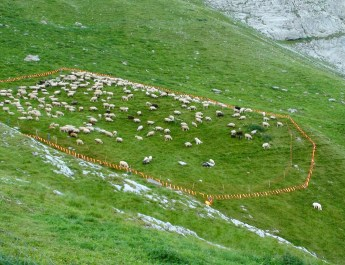 Herd Management Calanda Switzerland Alp Ramuz-15411.JPG