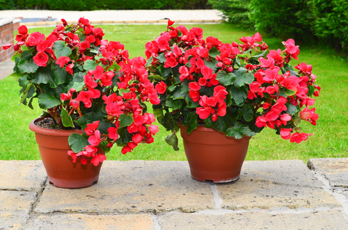 How To Keep Your Potted Plants In Shape All Summer Here By Design