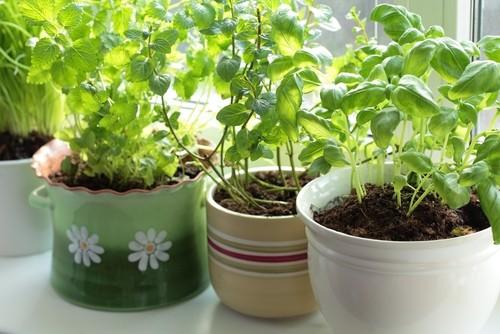 herbs.sill