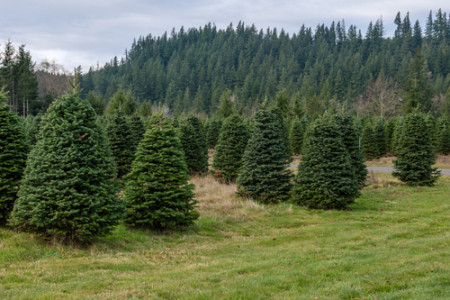 chr tree farm 1