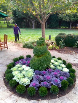 gingery parterre