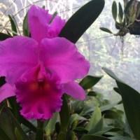 Exploring Lo de Perla, Mexico's Exotic Orchid Garden