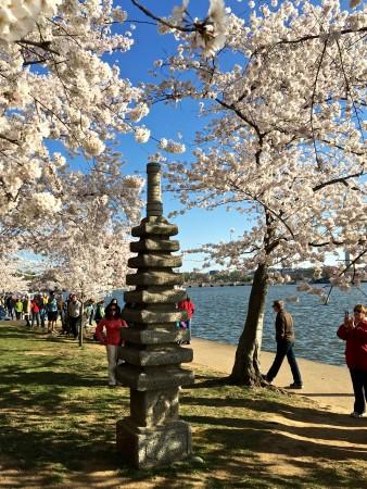 Japanese Pagoda at Washington, DC's Tidal Basin.
