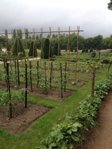 Chen.vegetable garden (2)