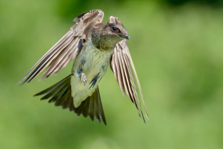 pm.female in flight 2