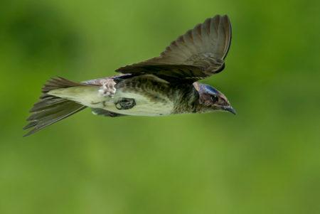 pm.female in flight