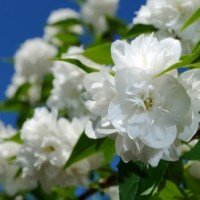 Top Plants for Creating A Year-Round Fragrant Garden