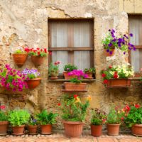 How to Keep Your Potted Plants In Shape All Summer