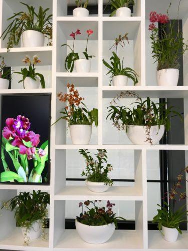 Hirshhorn orchid show