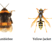 Bees, Wasps and Hornets: Here's How To Tell The Difference