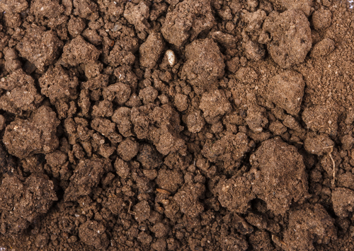 fertile, aerated soil