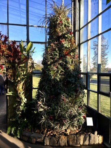 Tillandsia Tree/A Longwood Christmas