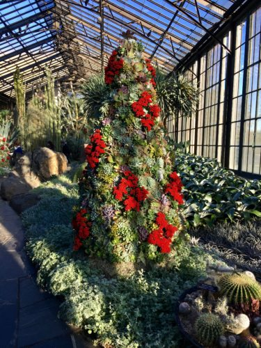 Succulent tree/A Longwood Christmas