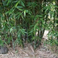 Bamboo Gets A Makeover Thanks To A California Garden