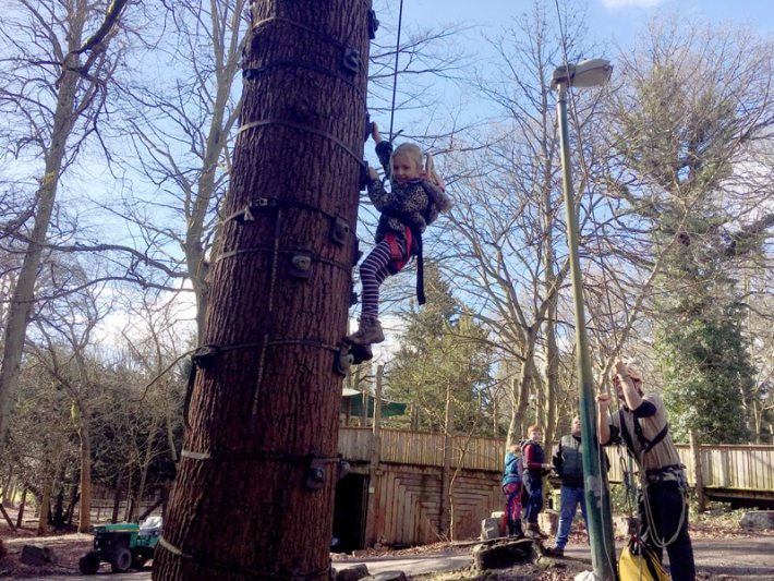 Tree Climbing at Beamish Wild