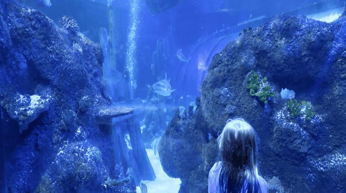 Shark Bait Reef