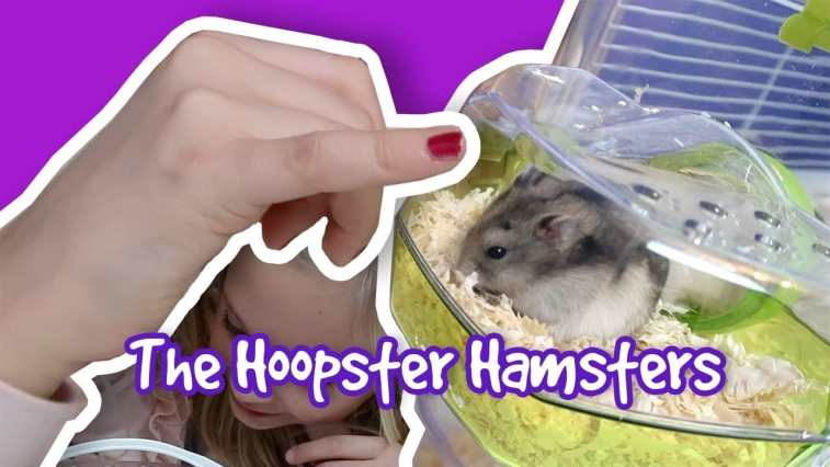 The Hoopster Hamsters