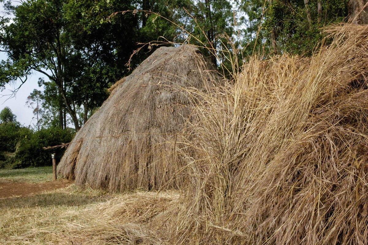 Mijikenda village at Bomas of Kenya near Nairobi