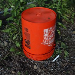 Bucket covering a plant from frost damage
