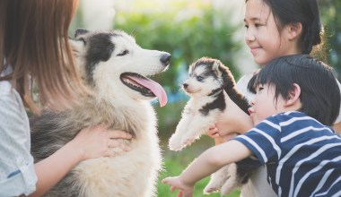 Asian family playing with dogs