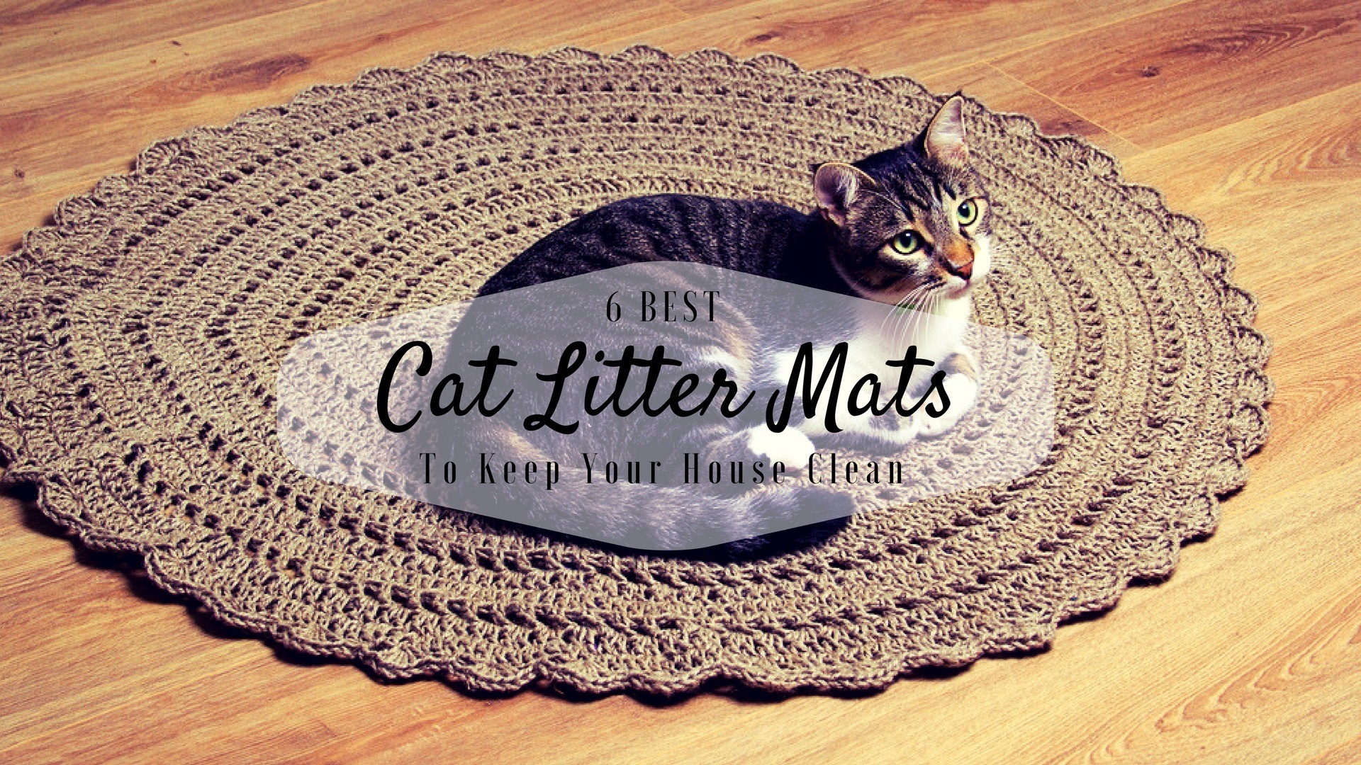 urine scatter cat kitty is mats pet free mat quality extra best premium tm paws litter smiling reviews large convenience the control catcher with a bpa