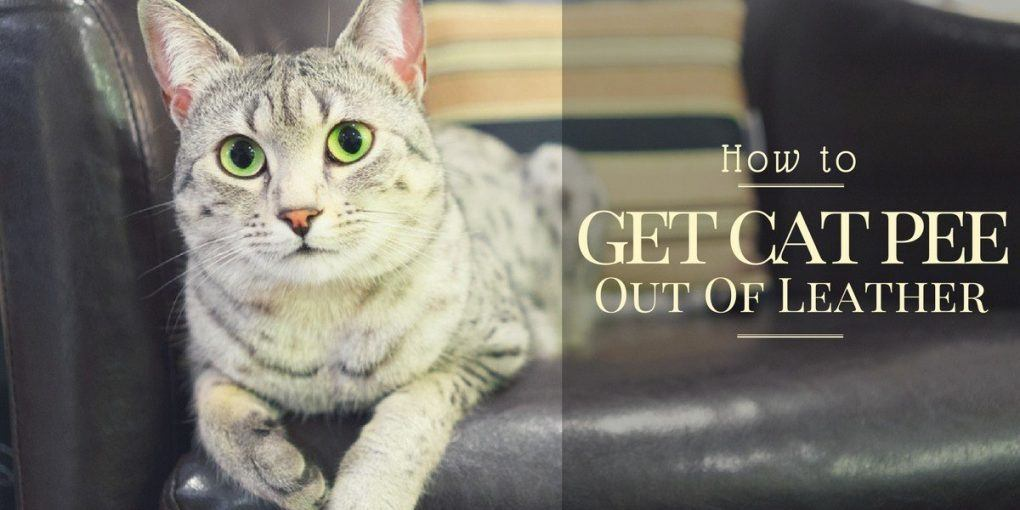 cat urine on leather sofa companies are you facing the problem how to get pee out of