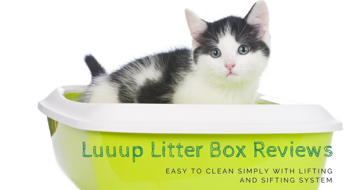 luuup litter box reviews easy to clean simply with lifting and sifting system