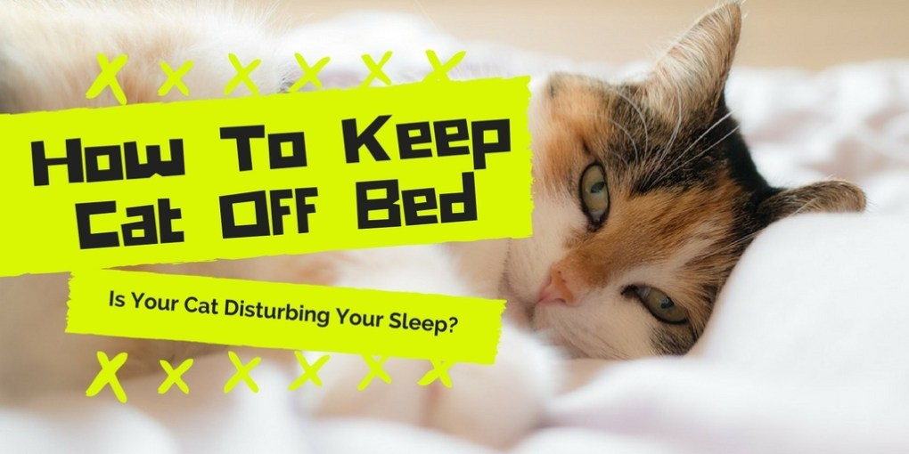 How To Keep Cat Off Bed