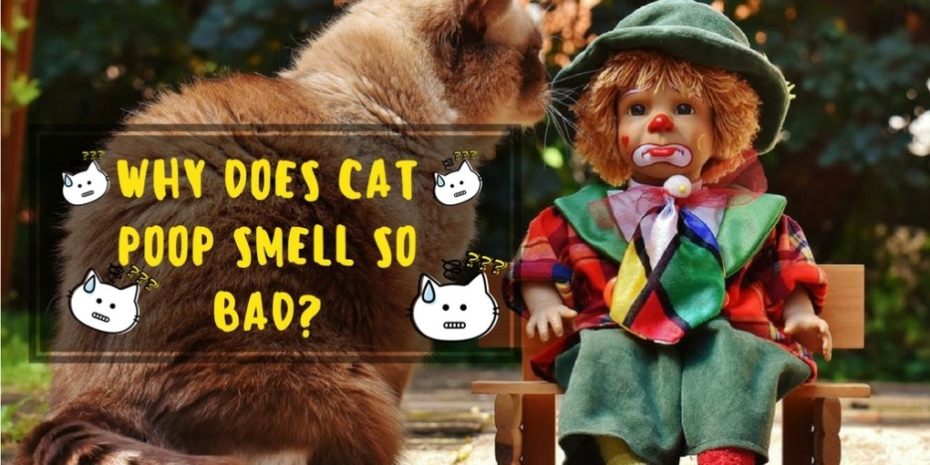Why Does Cat Poop Smell So Bad