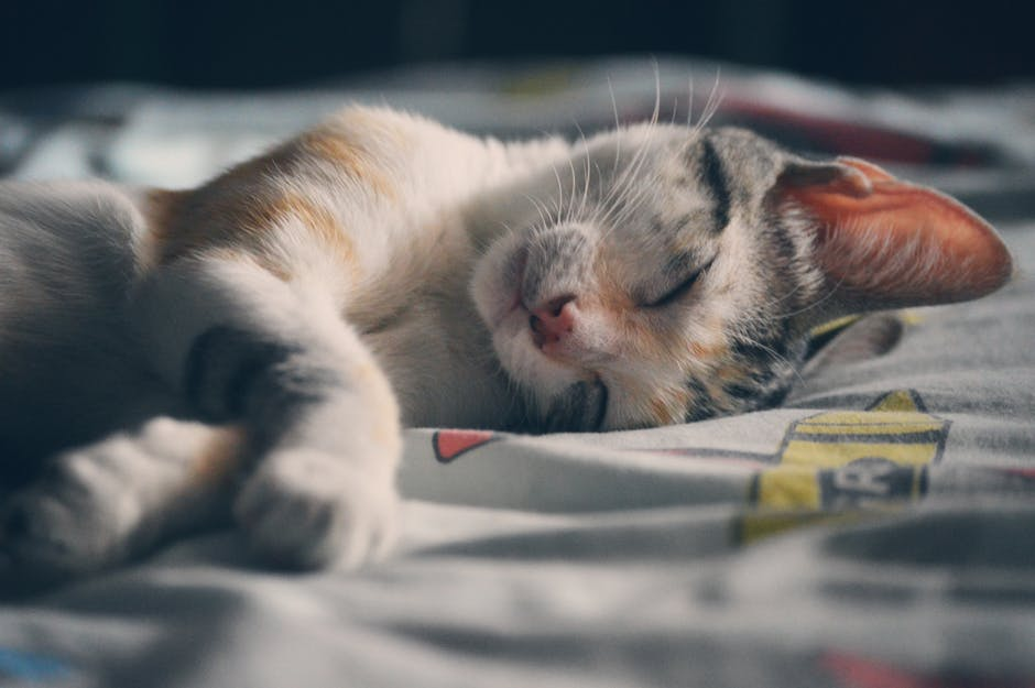 Why does cat poop smell so bad?