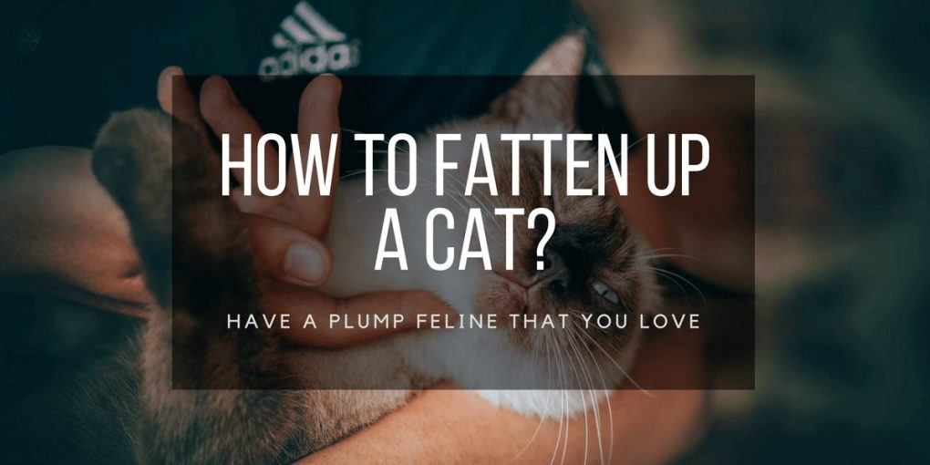 how to fatten up a cat