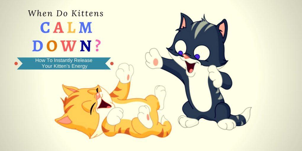 when do kittens calm down