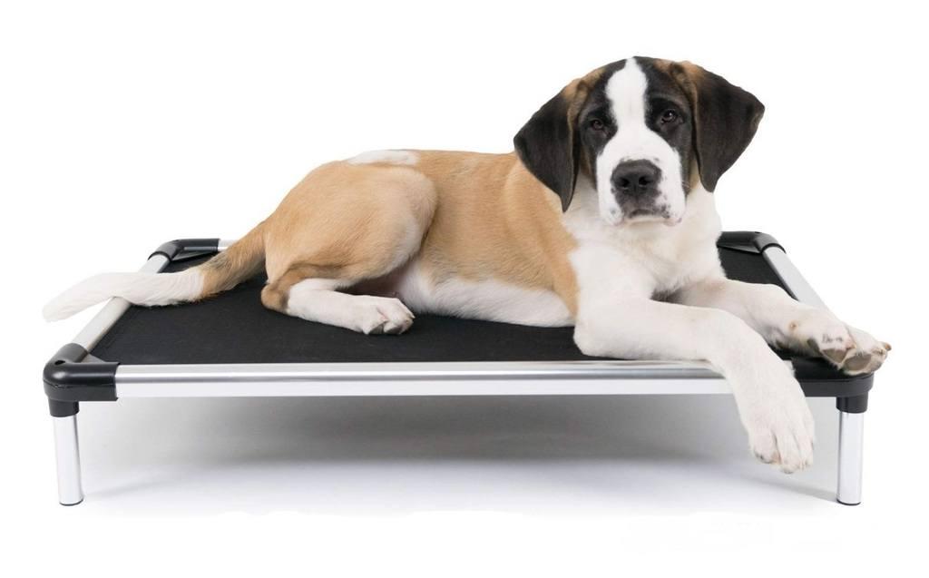 Best Raised Dog Bed 5 Orthopedic Elevated Dog Beds 2020 Herepup