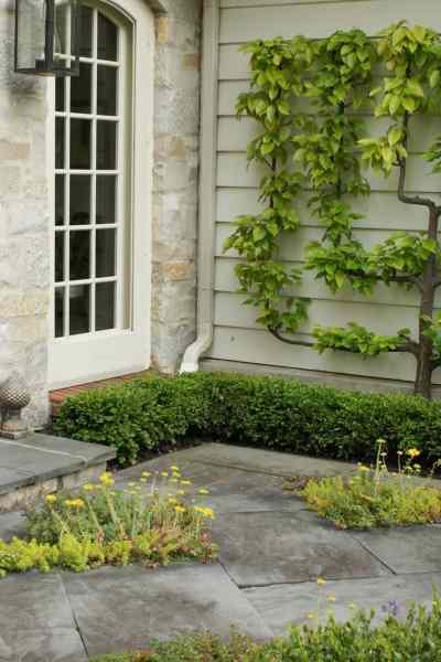 Espalier DIY: A Small Space Garden Solution