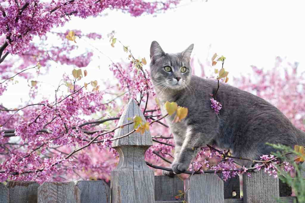 Grateful Gardener Cat on Fence