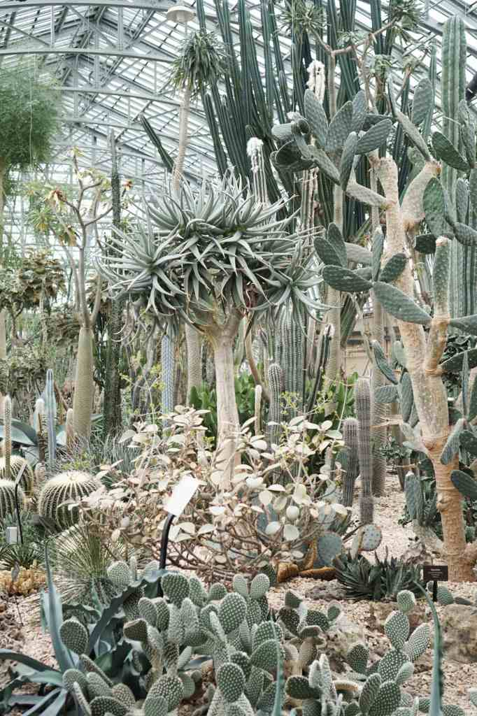 Garfield Park Conservatory Cactus