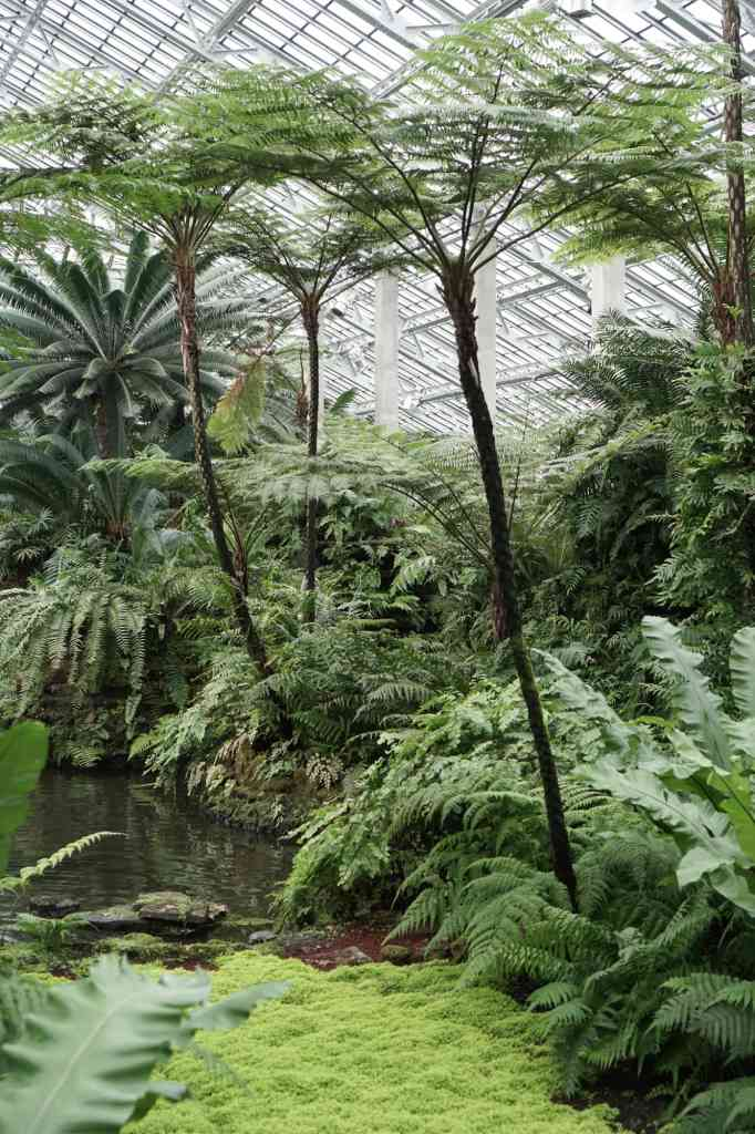 Garfield Park Conservatory Palm Pond