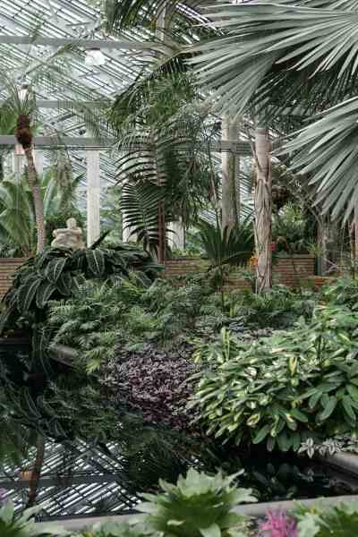 Shake the Winter Blues with a Visit to Chicago's Garfield Park Conservatory