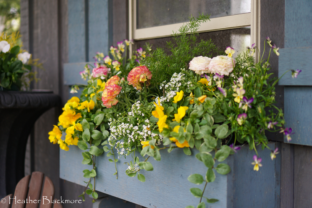 Window box planted with spring flowers