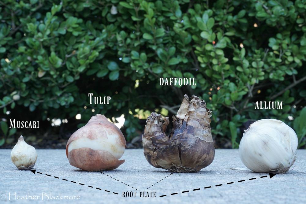 Bulb Sizes