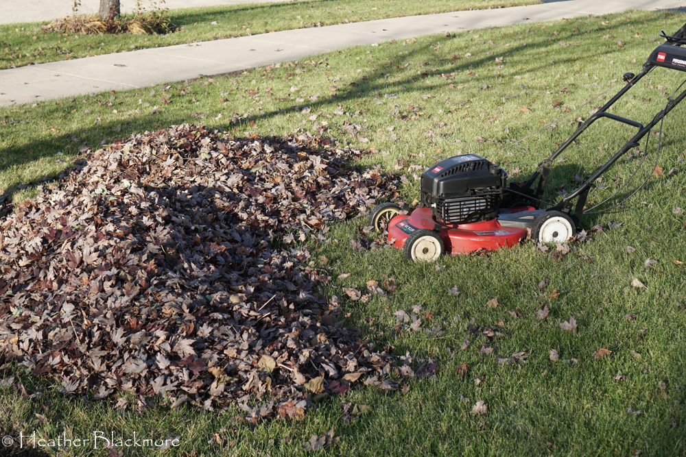 Piled leaves with mower