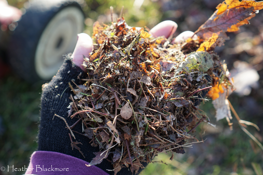 Handful of mulched leaves
