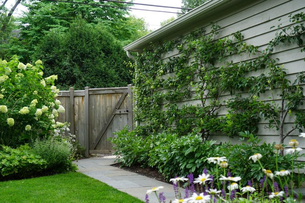 Urban garden espalier