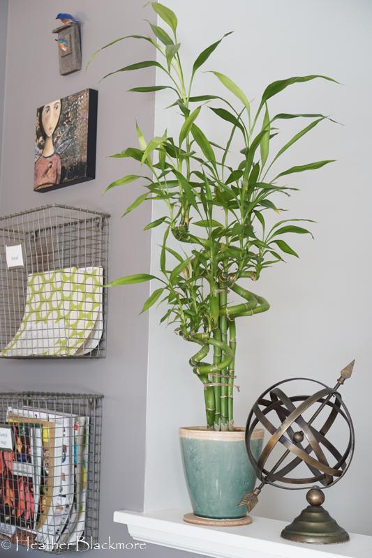 Lucky Bamboo houseplant