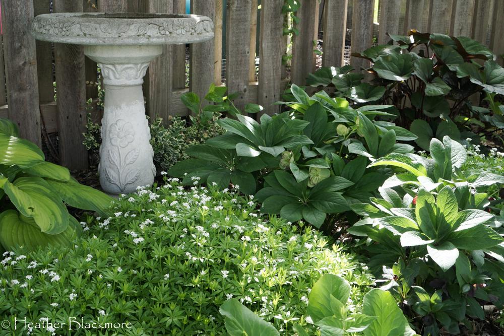 Dry Shade Garden