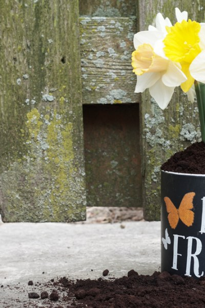 Coffee Grounds for the Garden: How Much Is Too Much?